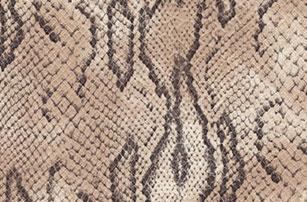Dackor - Leather Python Snake